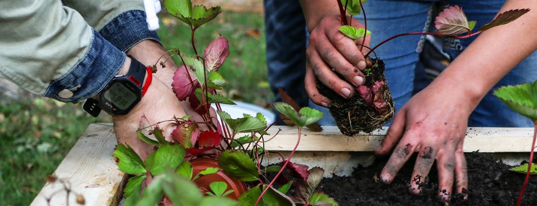 Hofgeflüster – Gute Nachbarschaft ist pflanzbar