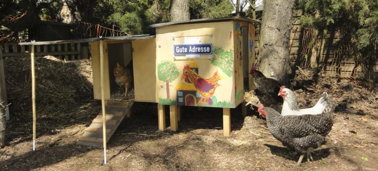 Nimm 4 – Stadthühner im Ruhestand